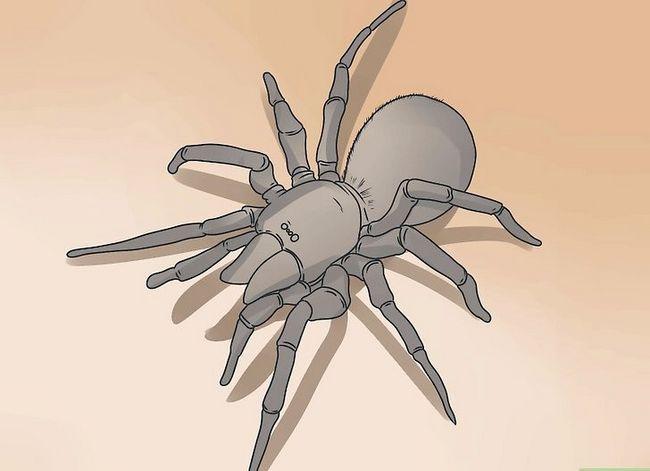 Prent getiteld Identifiseer `n muis Spider Stap 7