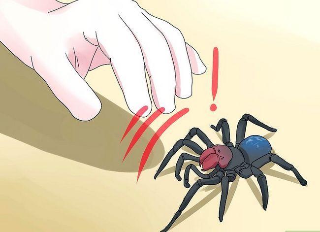 Prent getiteld Identifiseer `n muis Spider Stap 8