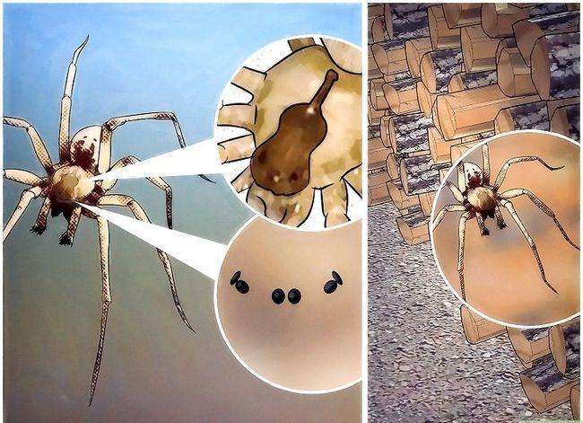 Prent getiteld Identifiseer Spiders Stap 7