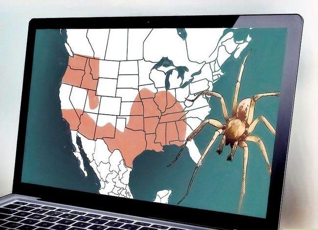 Prent getiteld Identifiseer Spiders Stap 11