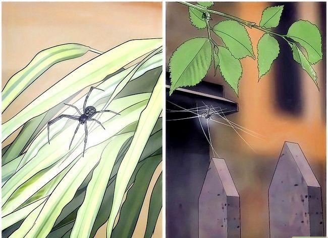 Prent getiteld Spiders identifiseer Stap 5