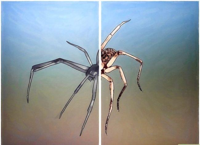Prent getiteld Spiders identifiseer Stap 4