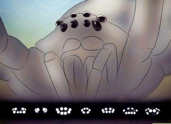 Prent getiteld Identifiseer Spiders Stap 2