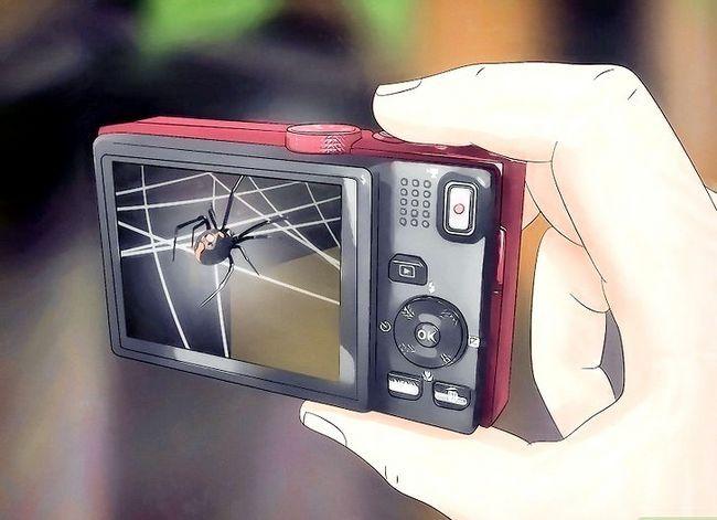 Prent getiteld Spiders identifiseer Stap 12