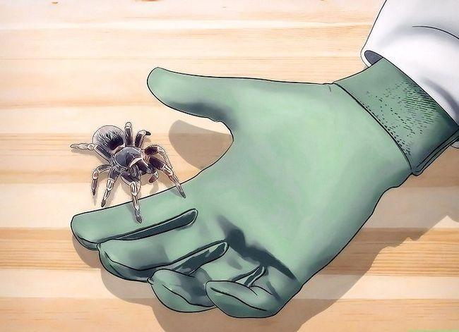 Prent getiteld Spiders identifiseer Stap 6