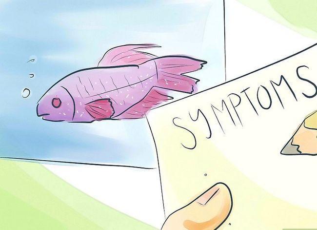 Prent getiteld Identifiseer akwarium vis siektes Stap 3