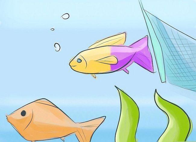 Prent getiteld Identifiseer akwarium vis siektes Stap 4