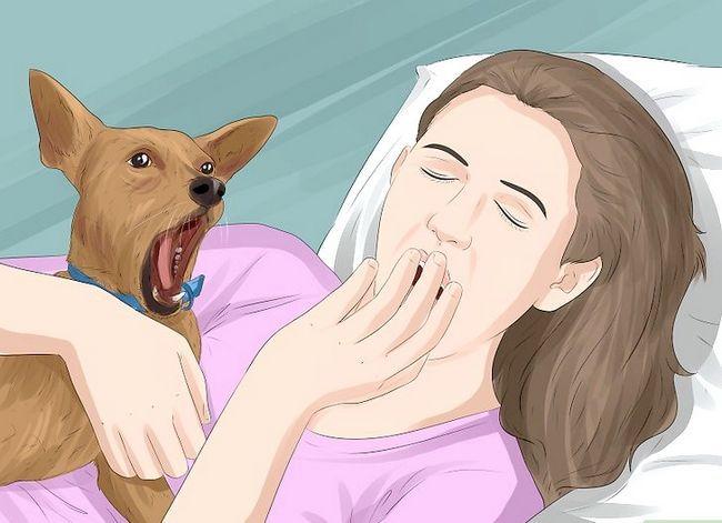 Prent getiteld Identifiseer empatie in diere Stap 4