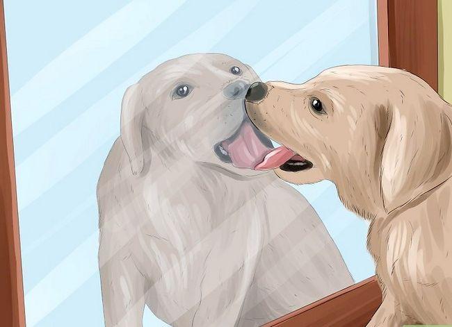 Prent getiteld Identifiseer empatie in diere Stap 6