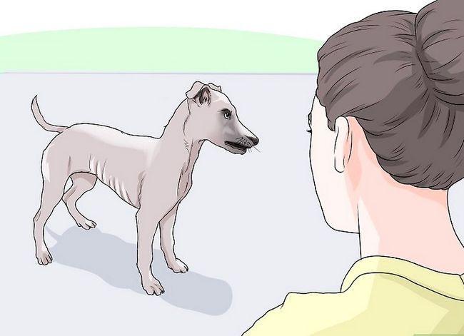 Prent getiteld Spottekens van spierverlies in honde Stap 2