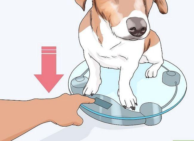 Prent getiteld Spottekens van spierverlies in honde Stap 3