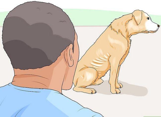 Prent getiteld Spottekens van spierverlies in honde Stap 4