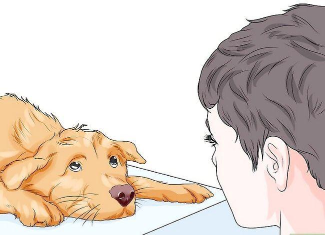 Prent getiteld Spottekens van spierverlies in honde Stap 5
