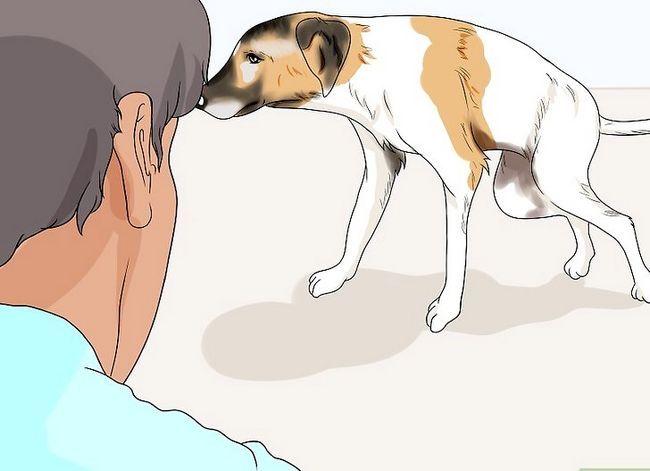 Prent getiteld Spottekens van spierverlies in honde Stap 6