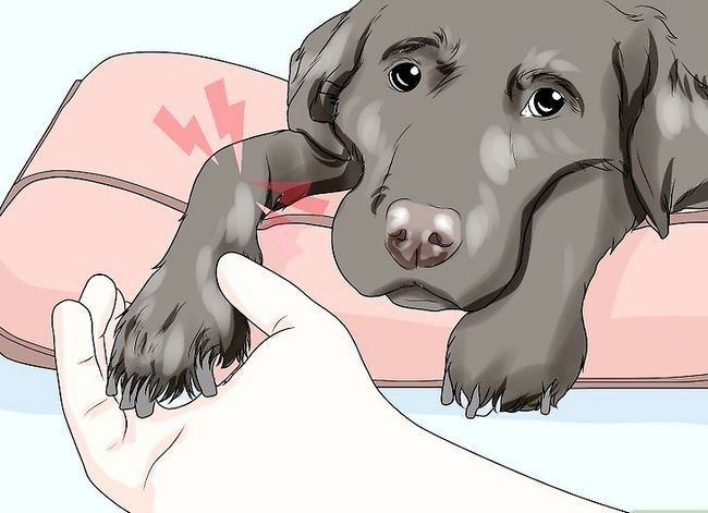 Beeld getiteld Spottekens van Spierverlies in Honde Stap 9
