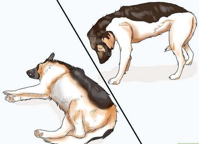 Prent getiteld Spottekens van spierverlies in honde Stap 10
