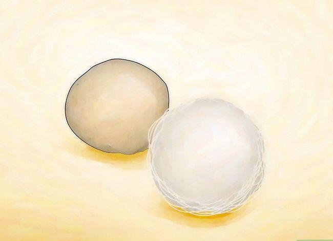 Prent getiteld Identifiseer Spider Egg Sacs Stap 1