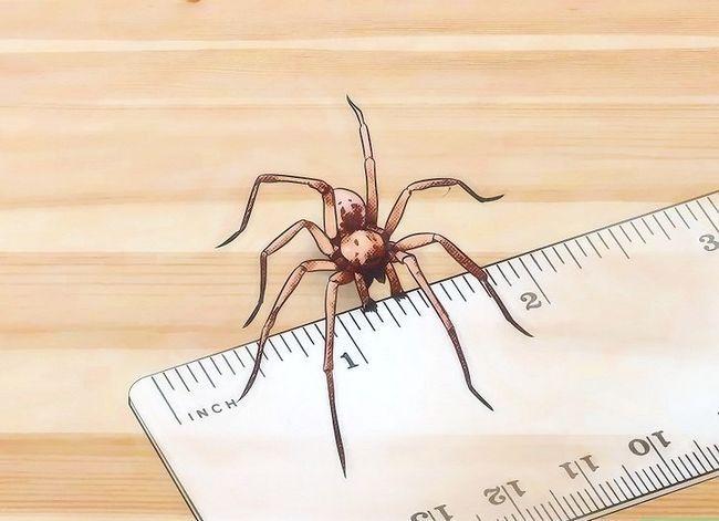 Prent getiteld Identifiseer Spider Egg Sacs Stap 11