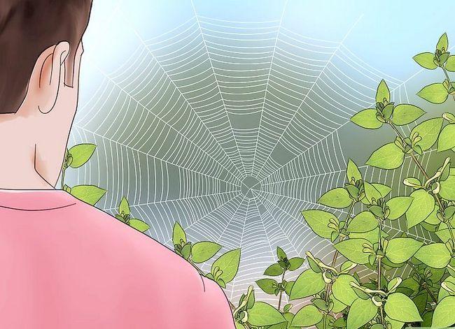 Prent getiteld Vang `n Spider Stap 3