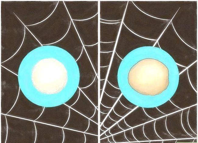 Prent getiteld Identifiseer Spider Egg Sacs Stap 5
