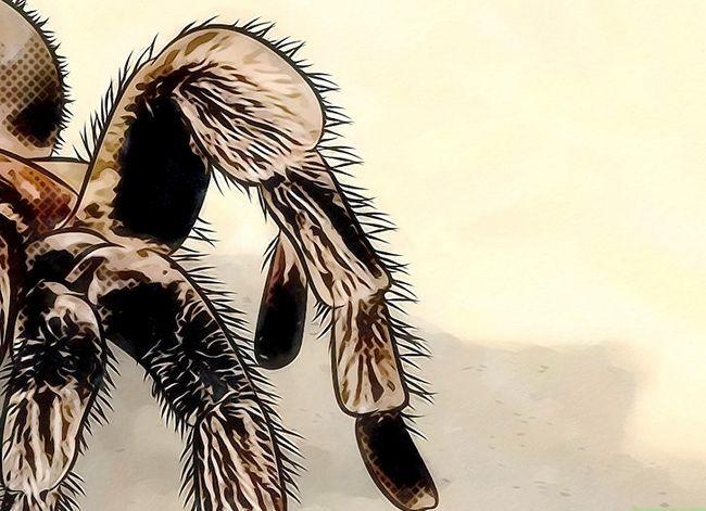 Prent getiteld Identifiseer Spider Egg Sacs Stap 10