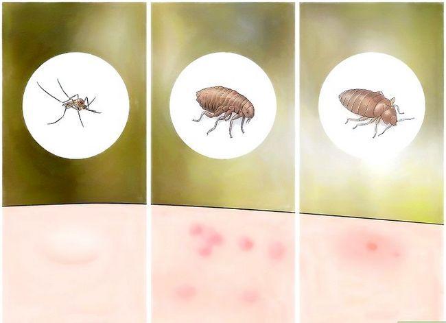 Prent getiteld Identifiseer Insek Bites Stap 2