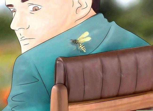 Prent getiteld Identifiseer Insekbytes Stap 8