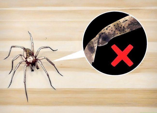 Prent getiteld Identifiseer `n Hobo Spider Stap 4