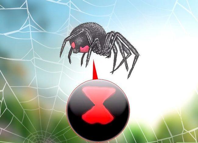 Prent getiteld Identifiseer `n Black Widow Spider Stap 1