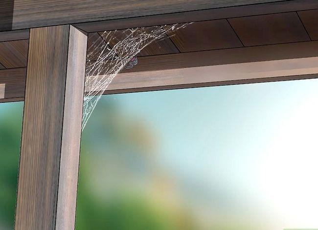 Prent getiteld Identifiseer `n Black Widow Spider Stap 11