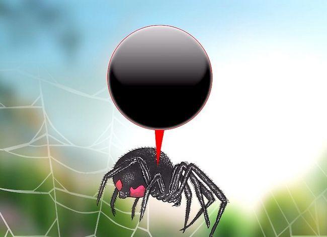 Prent getiteld Identifiseer `n Black Widow Spider Step 2