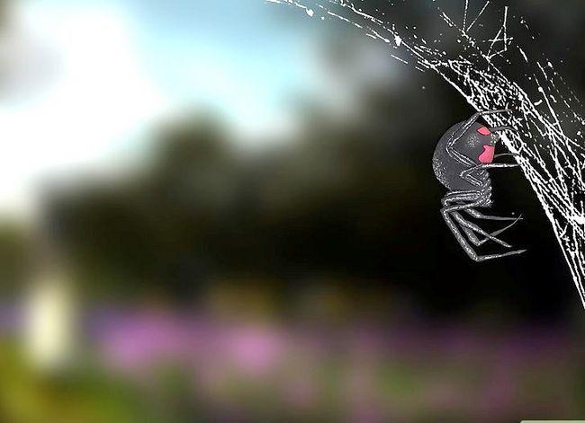 Prent getiteld Identifiseer `n Black Widow Spider Step 10