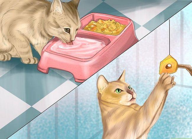 Prent getiteld Hou katte uit kamer Stap 11
