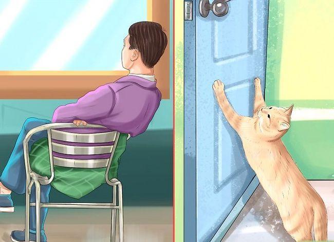 Prent getiteld Hou katte uit kamers Stap 5