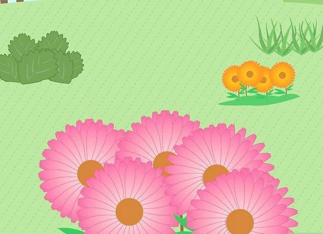 Prent getiteld Voeg medisinale plante by u tuin Stap 12