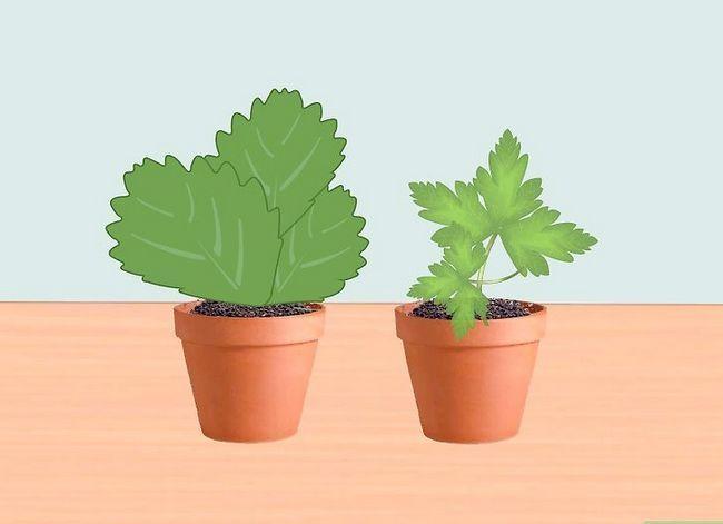 Prent getiteld Voeg medisinale plante by jou tuin Stap 2