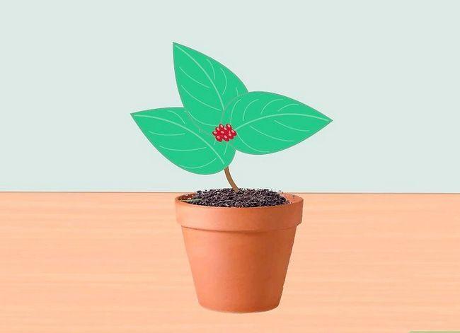 Prent getiteld Voeg medisinale plante by u tuin Stap 5