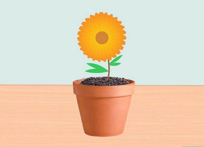 Prent getiteld Voeg medisinale plante by jou tuin Stap 6