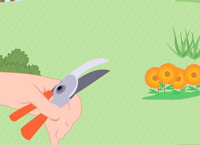 Prent getiteld Voeg medisinale plante by jou tuin Stap 11