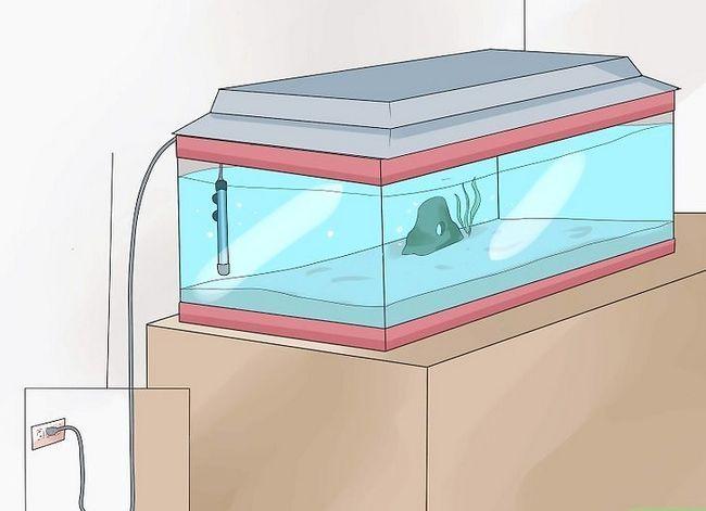 Prent getiteld Stel `n tropiese varswater akwarium op Stap 12