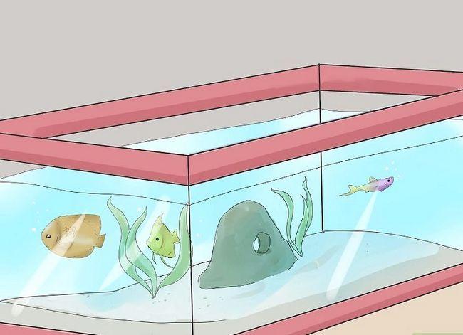 Prent getiteld Stel `n tropiese varswater akwarium op Stap 16