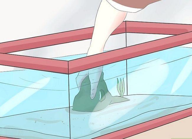 Prent getiteld Stel `n tropiese varswater akwarium op Stap 7