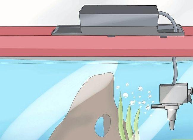 Prent getiteld Stel `n tropiese varswater akwarium op Stap 8
