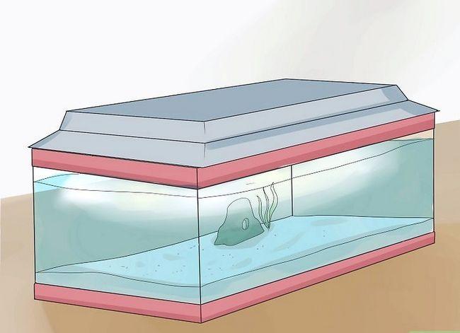 Prent getiteld Stel `n tropiese varswater akwarium op Stap 11