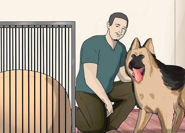 Beeld getiteld Stel nuwe hond vir jou huis en ander honde in Stap 16