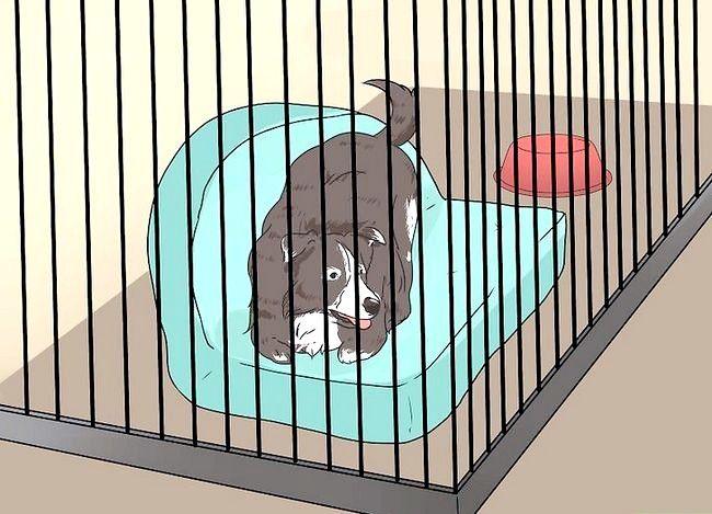 Beeld getiteld Stel nuwe hond vir jou huis en ander honde in Stap 17