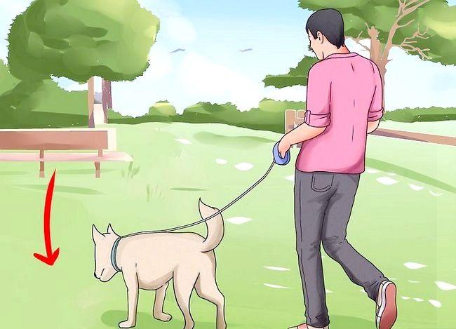 Beeld getiteld Stel nuwe hond vir jou huis en ander honde in Stap 19