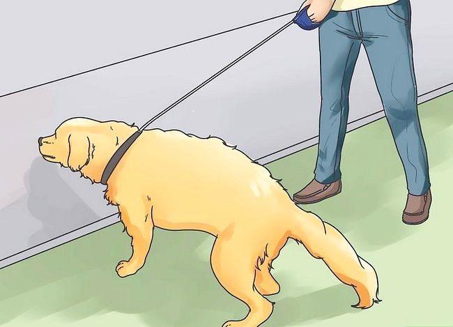 Beeld getiteld Stel nuwe hond vir jou huis en ander honde in. Stap 23