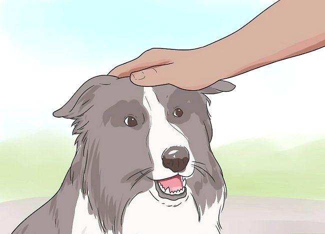 Beeld getiteld Stel nuwe hond vir jou huis en ander honde in Stap 24