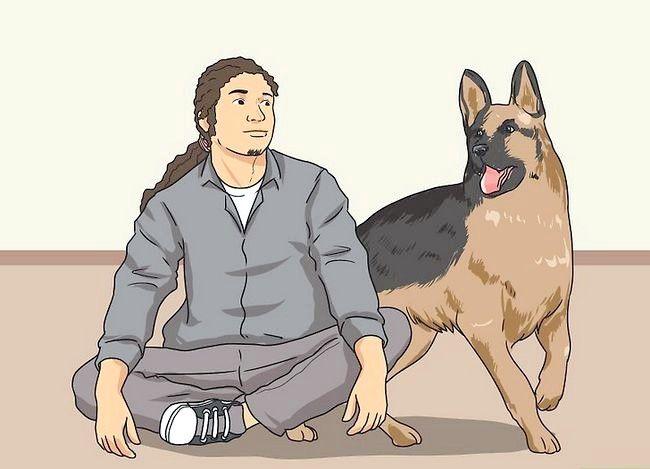 Beeld getiteld Stel nuwe hond vir jou huis en ander honde in. Stap 26
